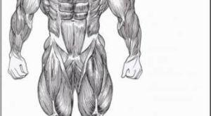 Как накачать дельты: упражнения на дельтовидные мышцы с примерами тренировок от эксперта